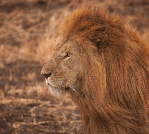 Conservation volunteering in Africa