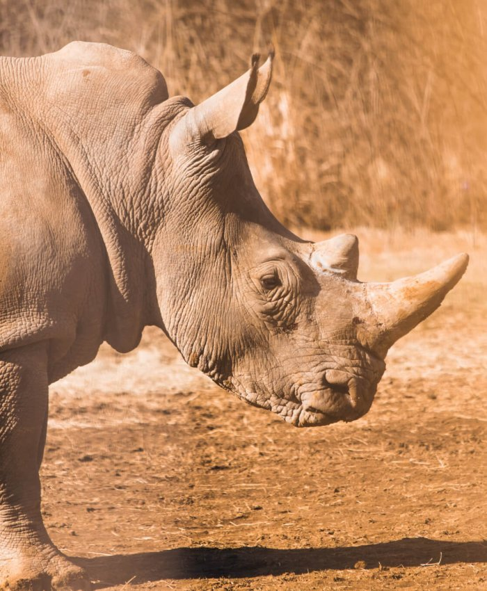 Track & monitor rhino